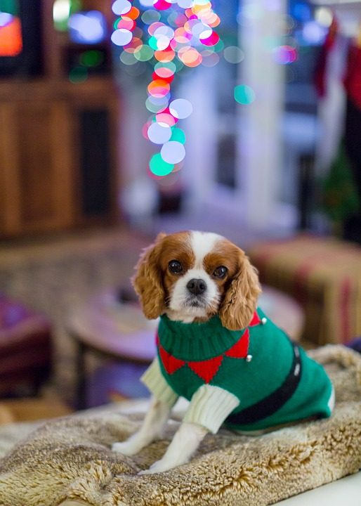 A Review of Sweaters for Small Dogs - Post Thumbnail